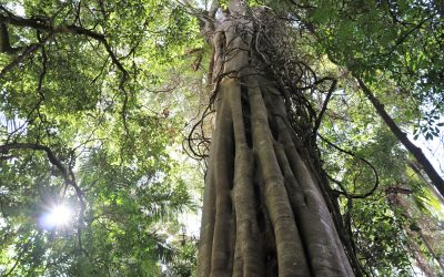 Stand Tall, Unite In Peace and Harmony – Tree Collective